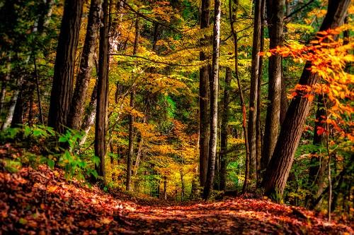 sur_le_chemin_des_saisons